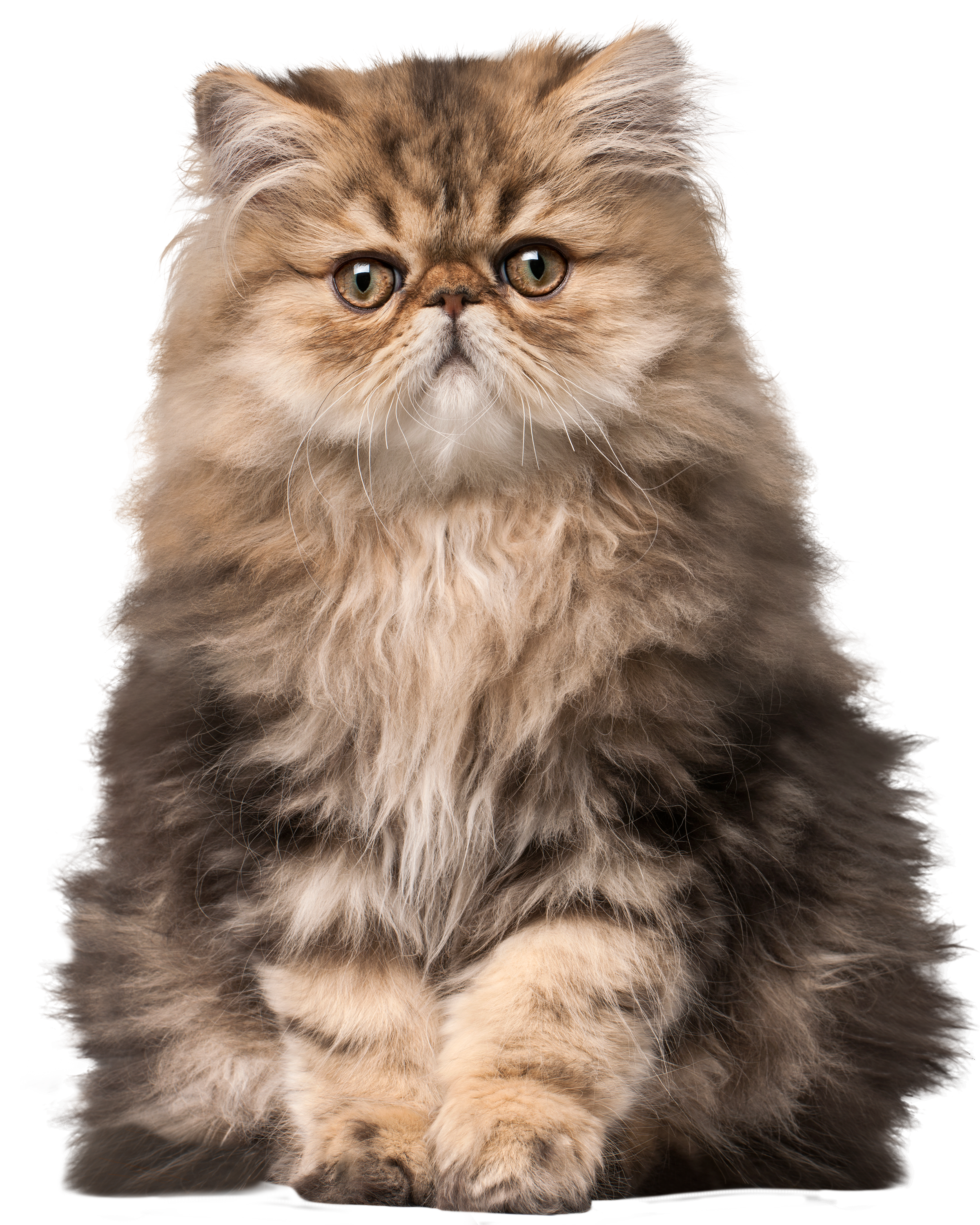 Animals png images. Cat clip art best