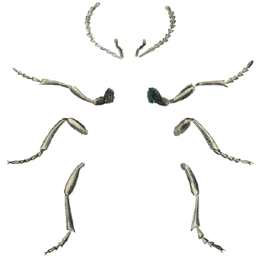 insect legs png