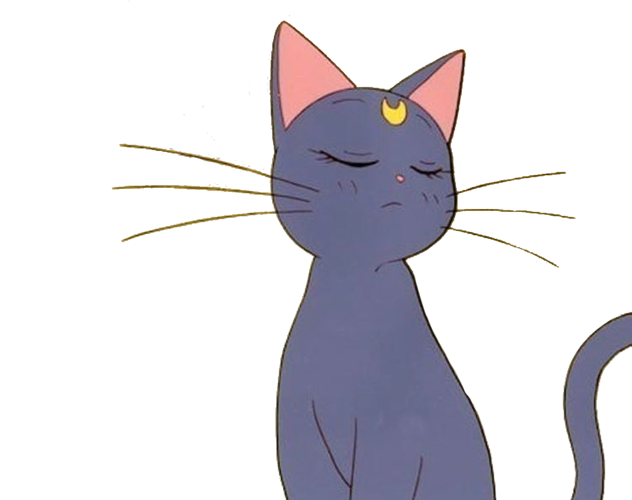 Anime cats png. Cat sailormoon aesthetic tumblr