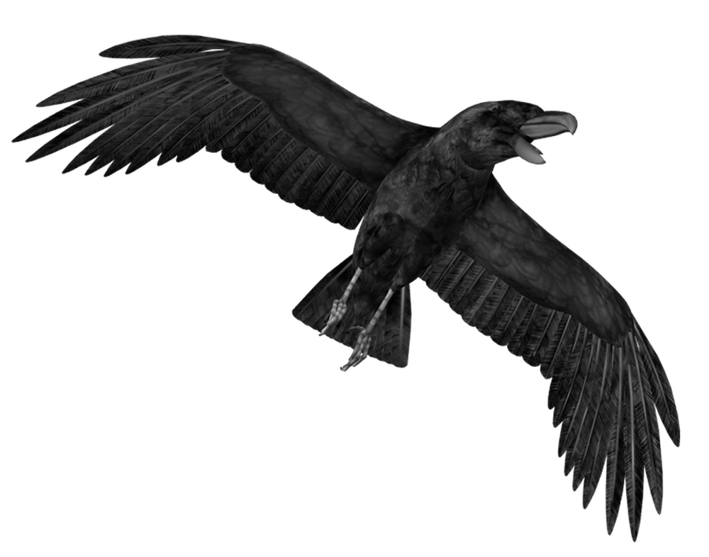 the crow png