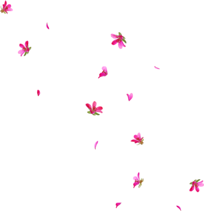anime flowers png