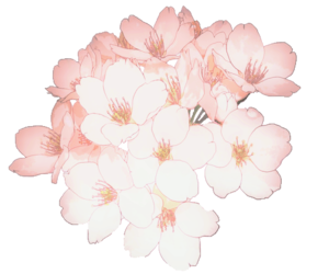 Anime flower png. Images about flores