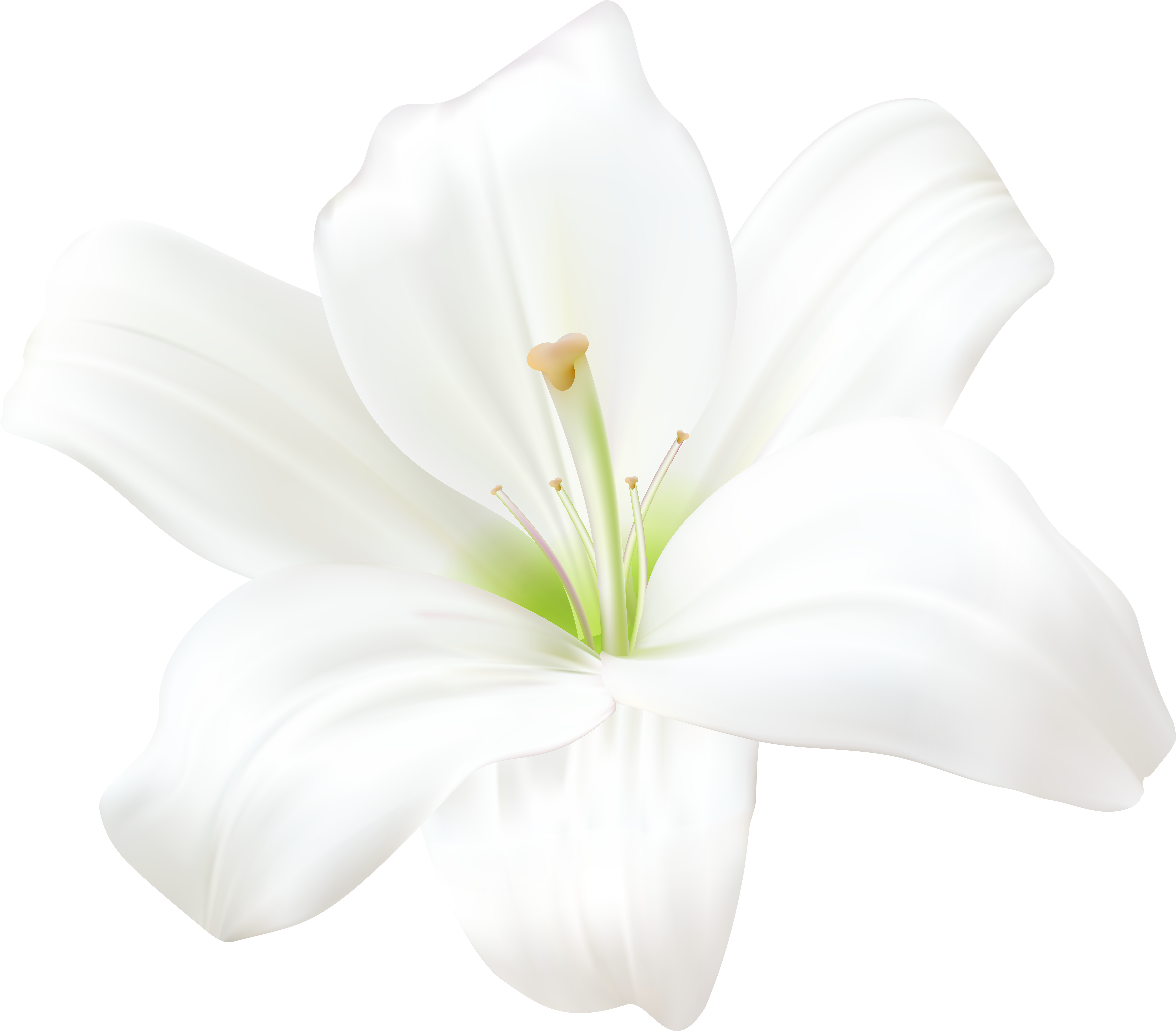 Anime flower png. Download white lilly art