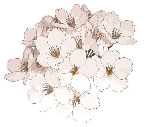Anime flower png. Image flowers pale pink