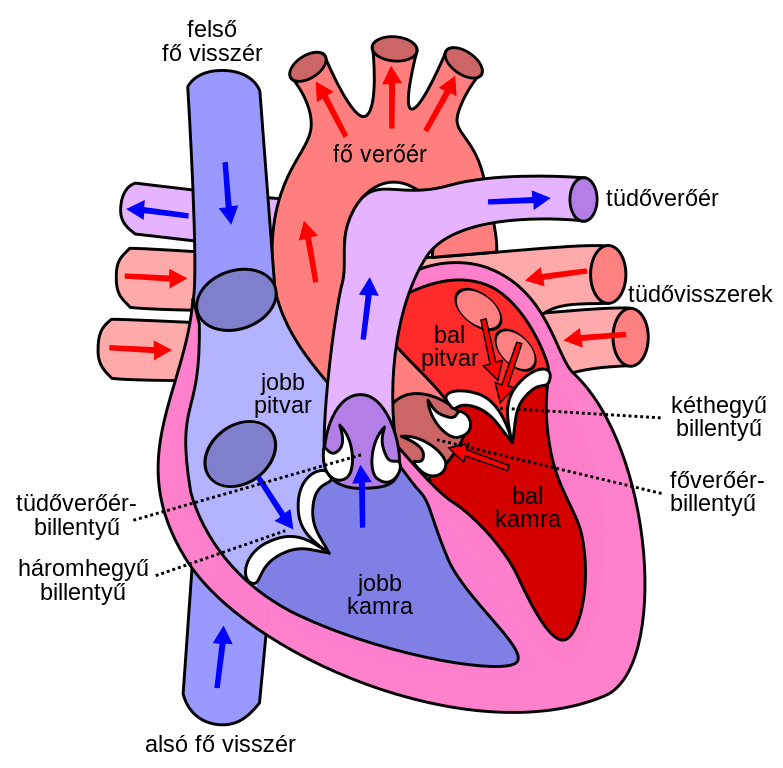 Annotated drawing heart. Diagram image library stock