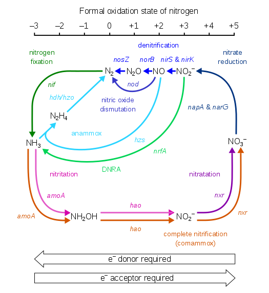 Annotated drawing nitrogen cycle. Wikipedia a schematic representation