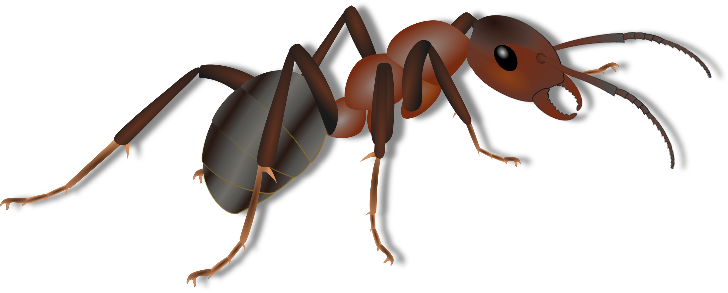 Ant clip art png. Ameise icons free and