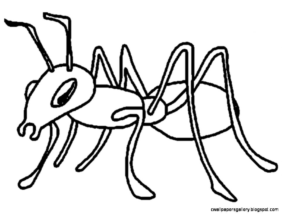 Ant clipart black and white. Ants wallpapers gallery