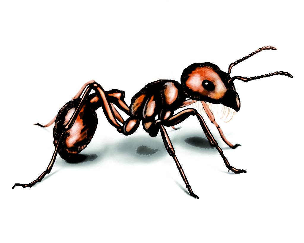 Ant clipart body part. Harvester typegoodies me