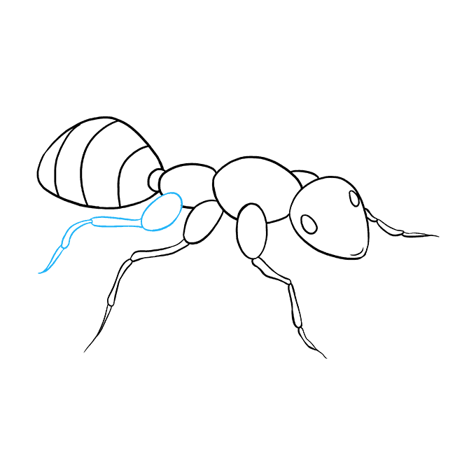 Ant drawing png. How to draw an