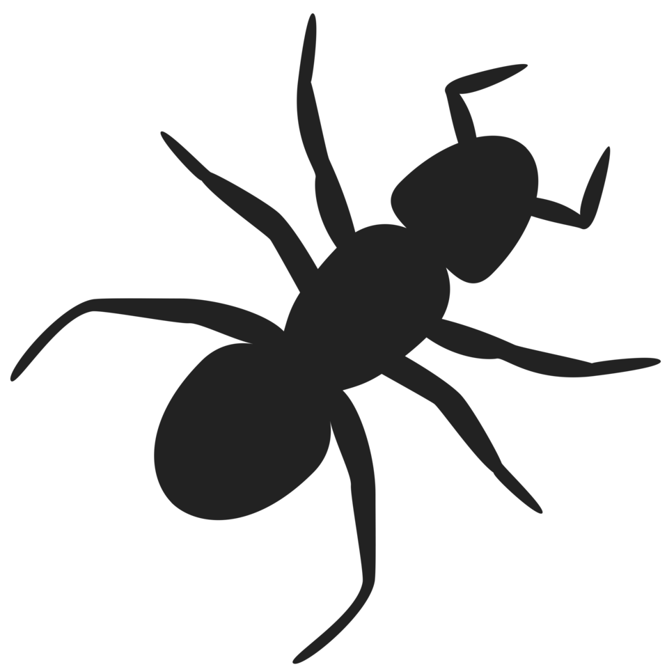 Ant illustration png. Free stock photo of
