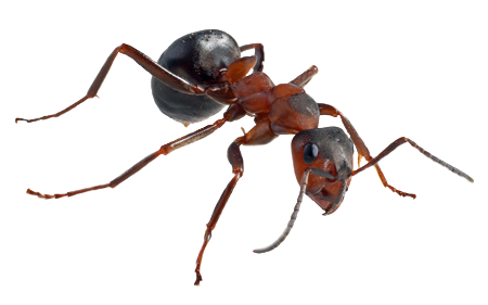 transparent ant background