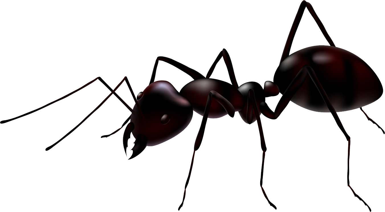 Ants vector three