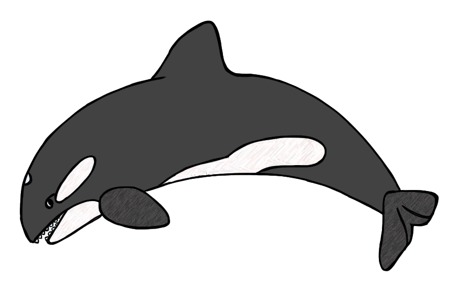 Seal antarctic animal pencil. Diving clipart whale graphic black and white