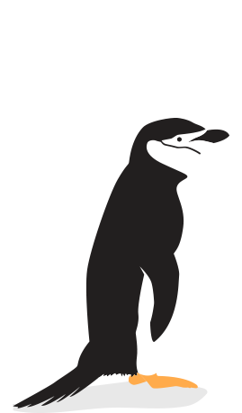 Drawing penguins chinstrap penguin. Of the world threats
