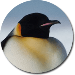 Antarctica drawing king penguin. Facts and information emperor