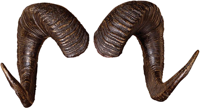 Horns png. Pin by pinkarmy on