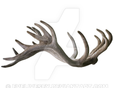 Antlers png transparent. Stag by evelivesey on