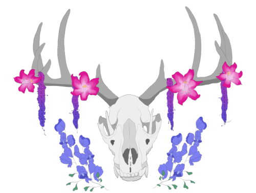 Necromancer drawing deer skull. Their antlers are so