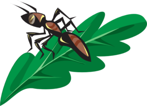Ants vector clipart. Brown ant on a