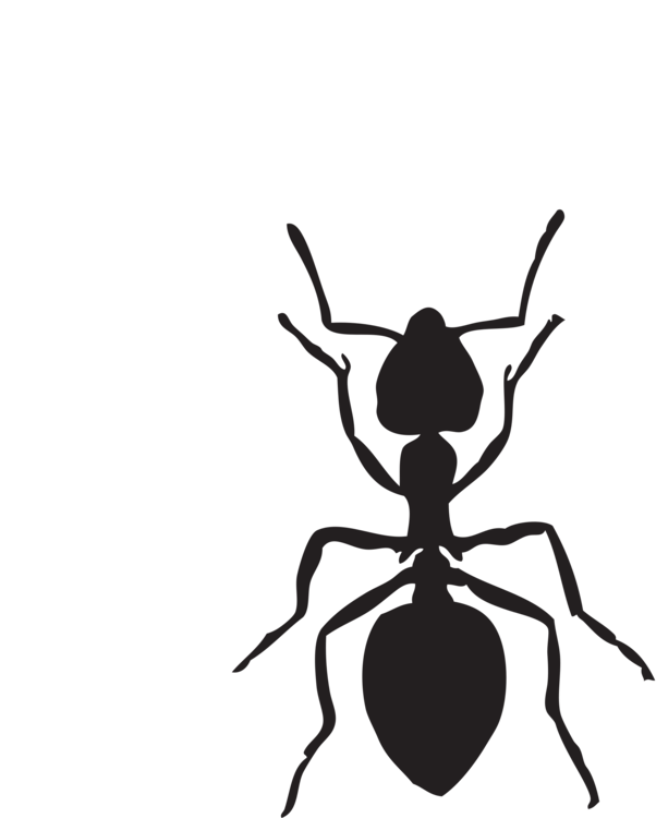 Ants vector food clipart. Black carpenter ant insect