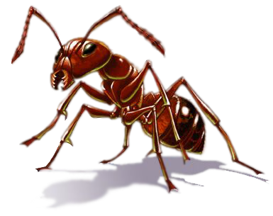 Vector ant transparent background. Download free png image