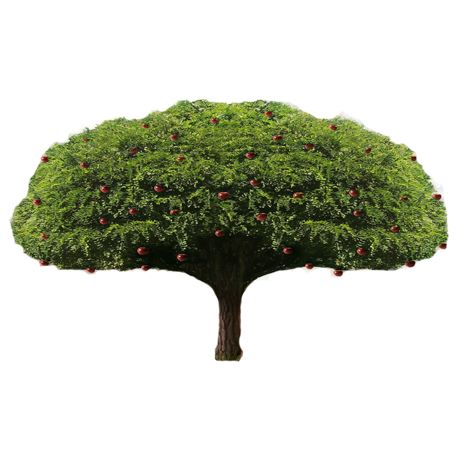 Apple tree png. By lordnicax on deviantart
