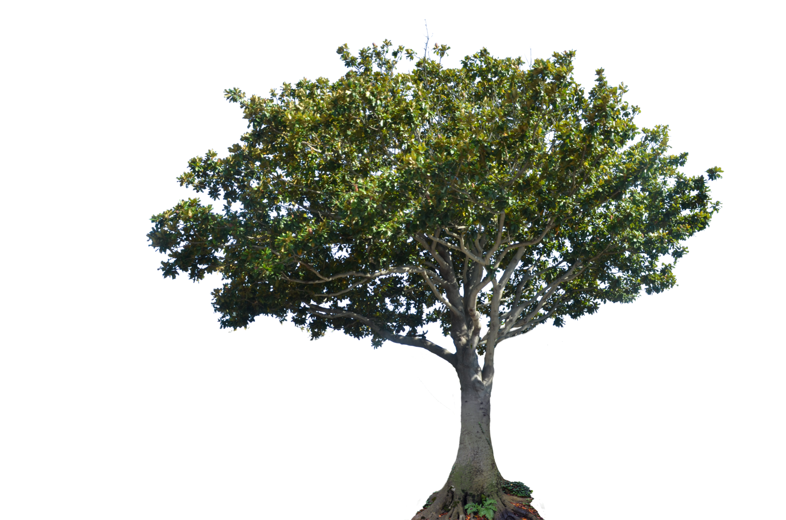 Apple tree png. Stock photo dsc by