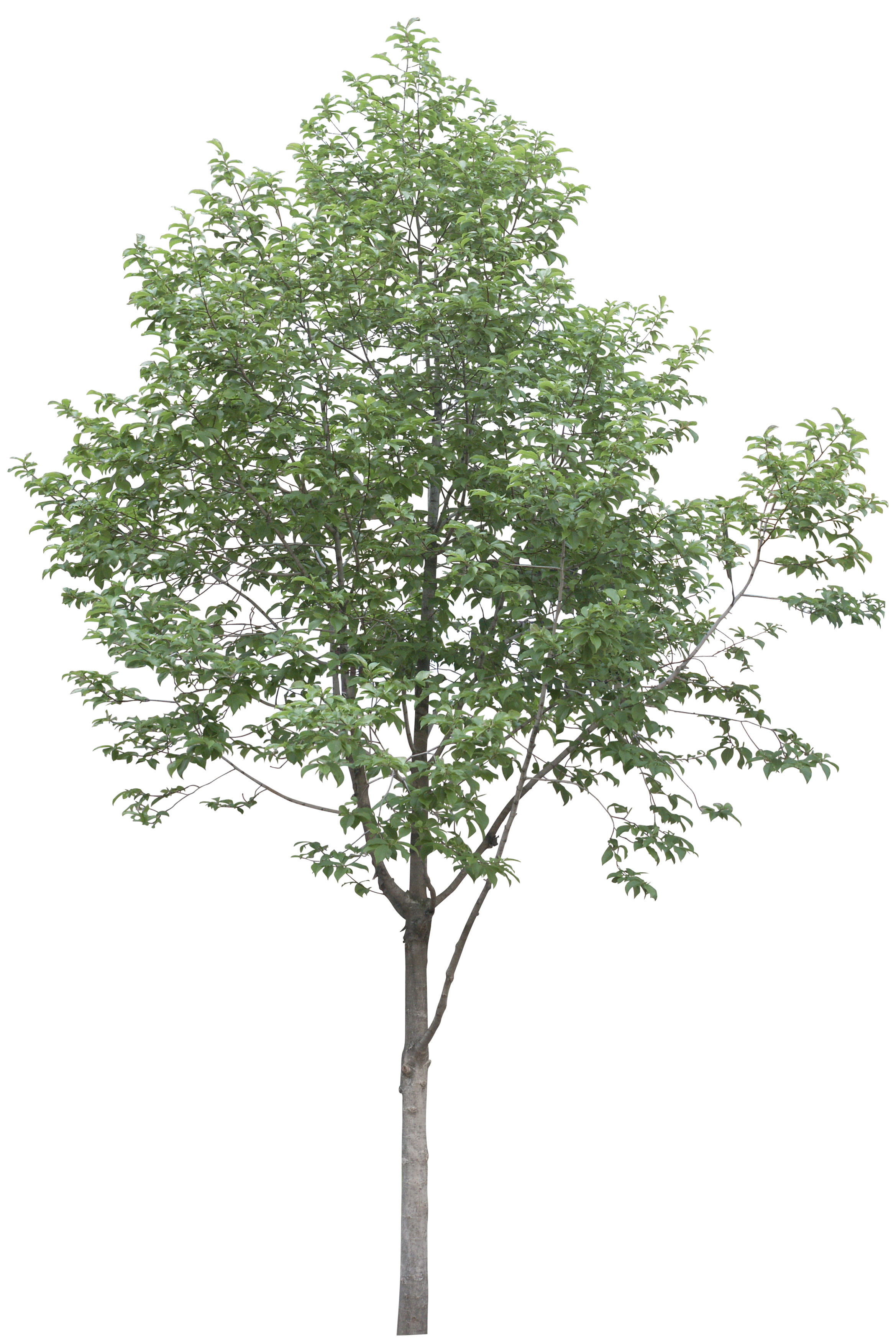 Arboles png photoshop. Image result for resources