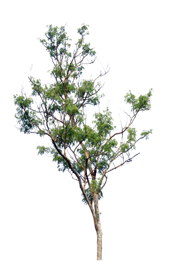 Arboles png photoshop. Tree images free icons