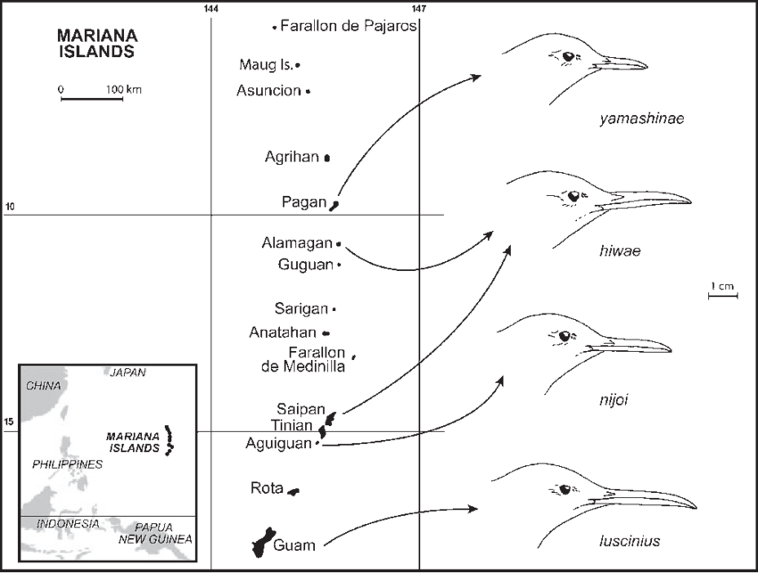 Archipelago drawing. Map of the mariana