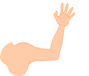 Arm clipart. Right