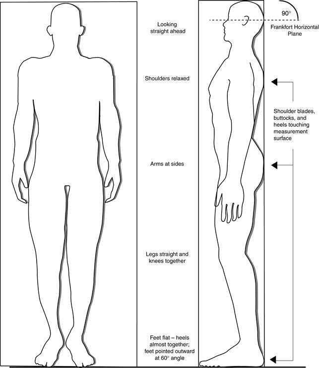 Arm clipart arm span. Vs height introduction drawing