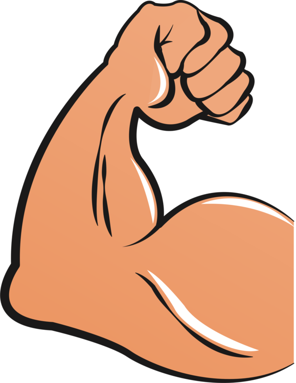Biceps drawing arm. Muscle clipart femoris hand