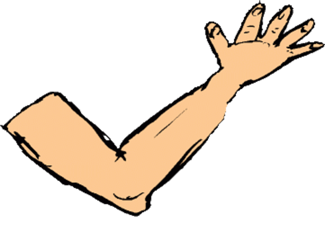 Arm clipart weak arm. Free human arms cliparts