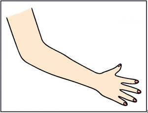 Arm clipart wrist. Arms free images at