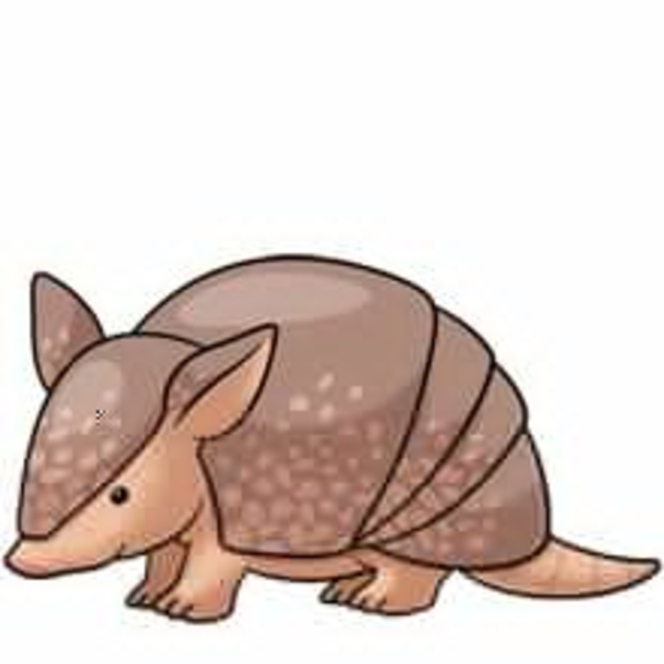 Cute free images at. Armadillo clipart picture library download