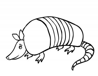 Armadillo clipart. Cartoon pictures best school