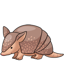 Baby items pinterest animali. Armadillo clipart cool clipart