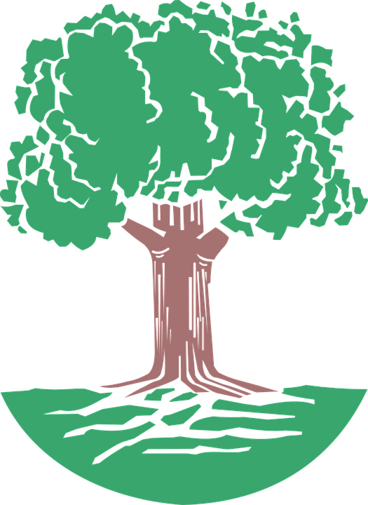 Roots clipart root texas. Redwood tree cliparts buy