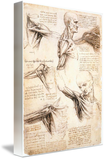 Artists drawing paper. Anatomical studies of the