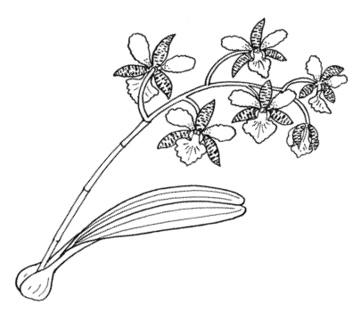 Artsy drawing flower. How to make orchids