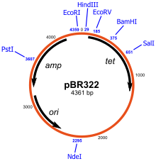As vector. Cloning wikipedia schematic representation