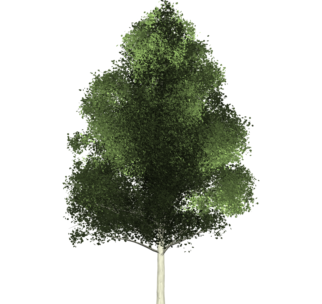Aspen tree png. Reference in some cases