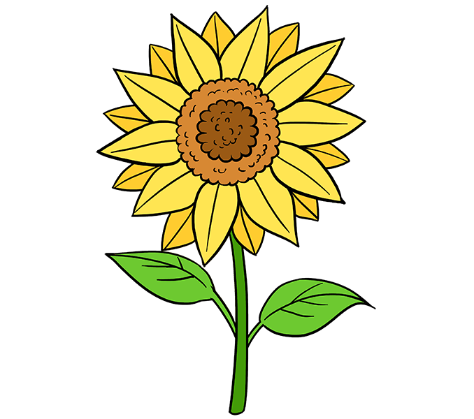 Drawing sunflowers small. How to draw a