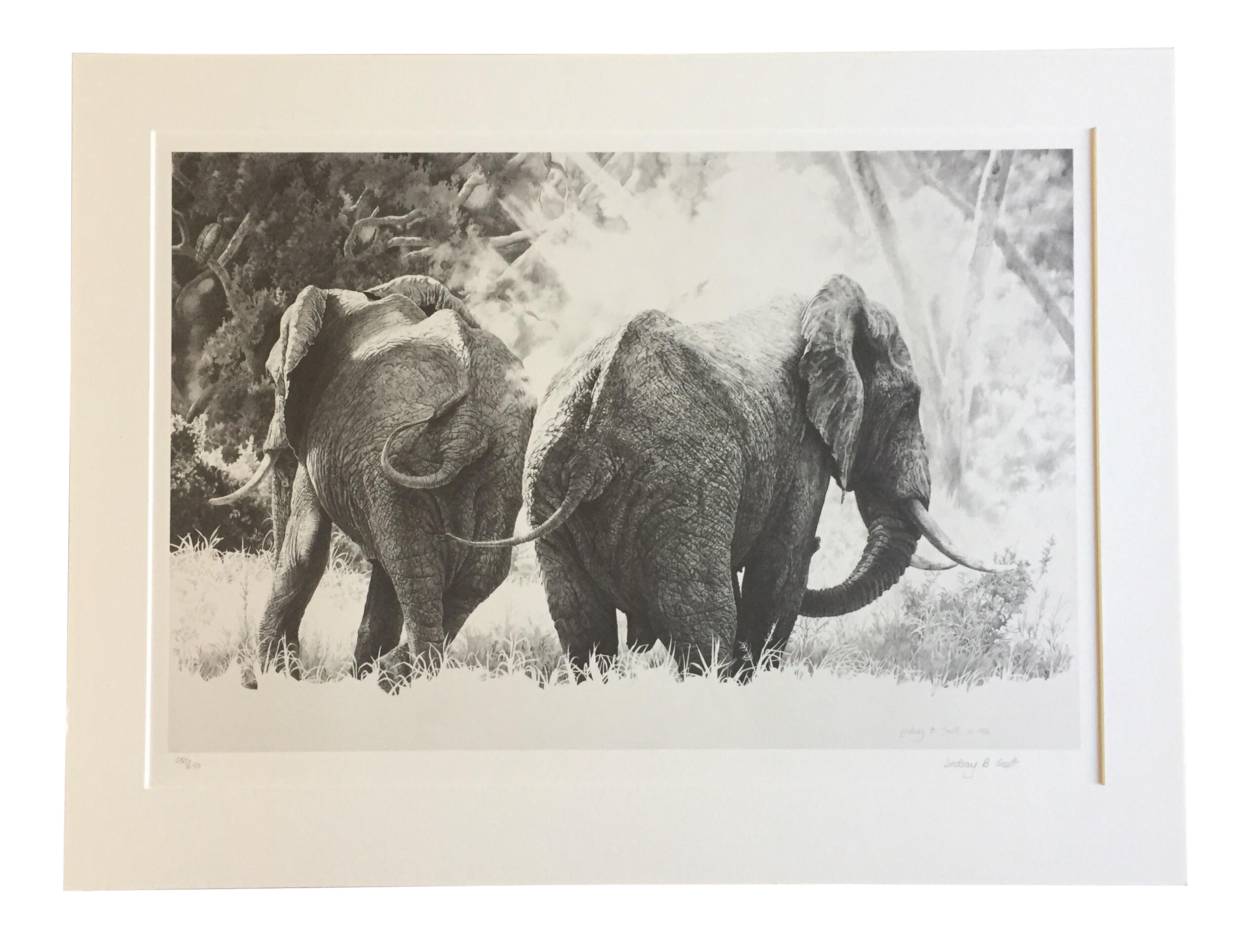 B drawing pencil. Lindsay scott elephants signed