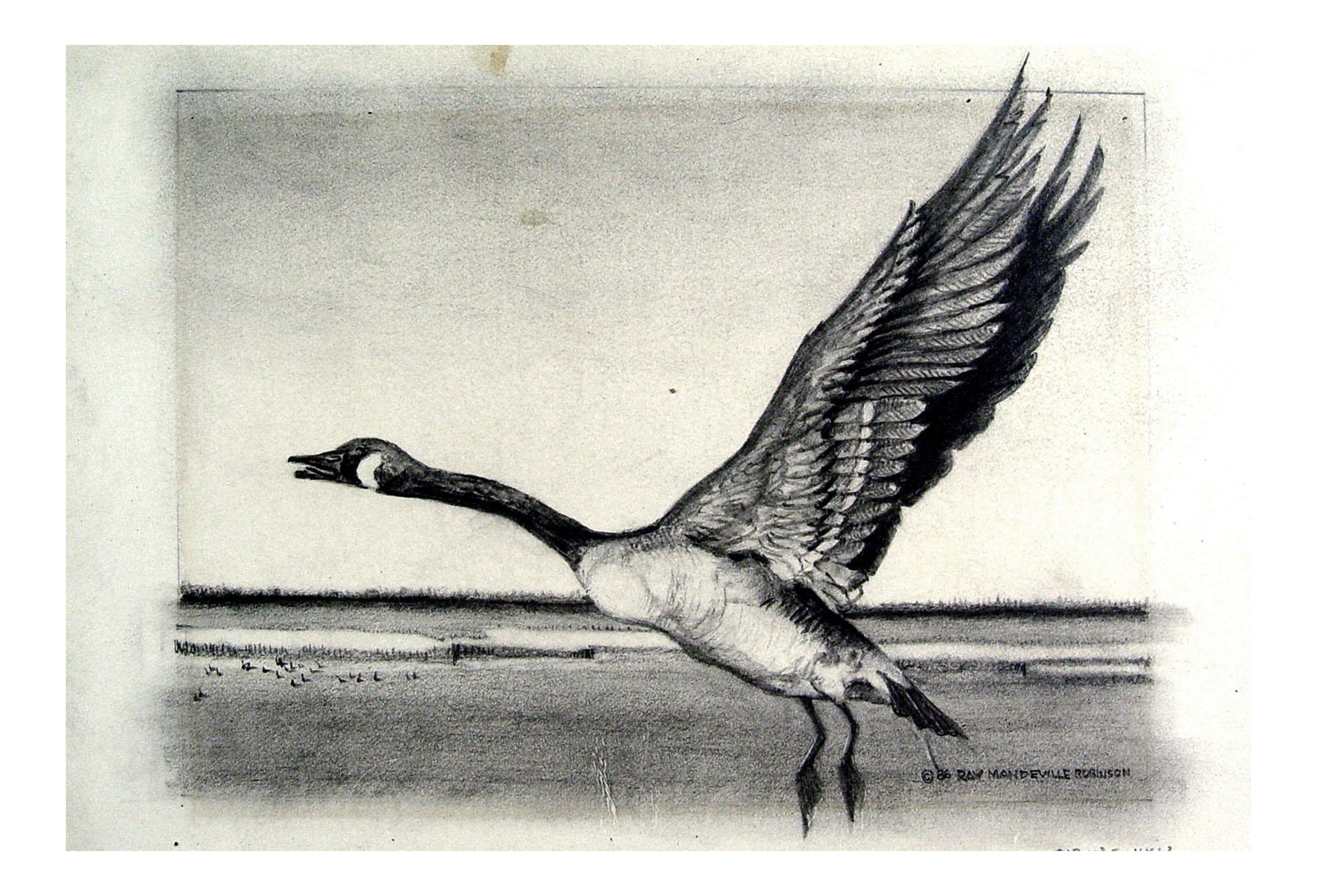 Drawing duck statue. Canadian goose pencil study