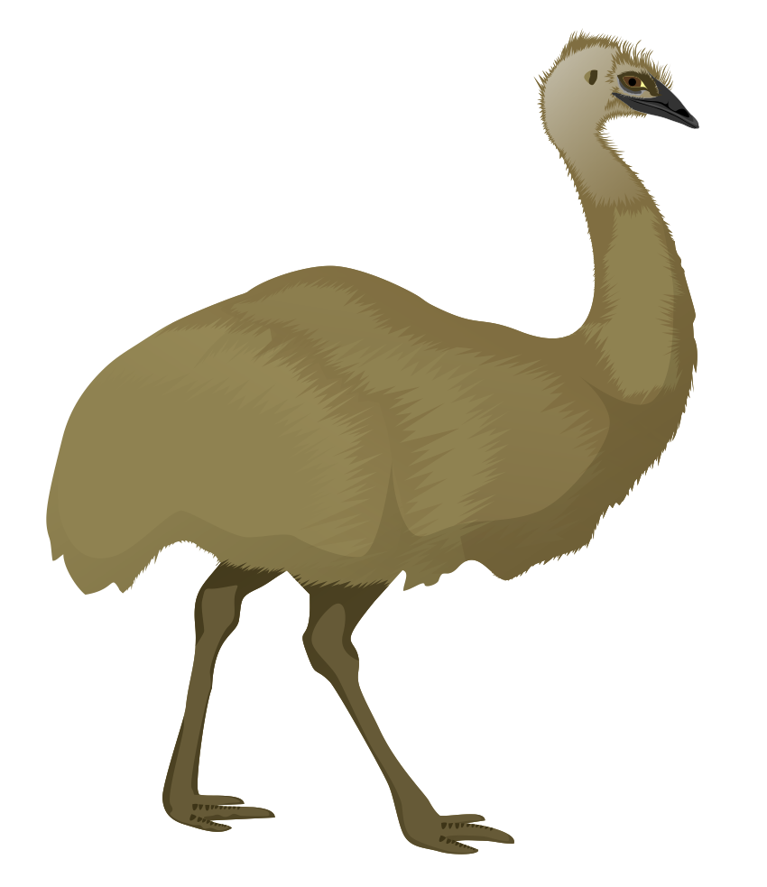 Australian drawing animal. Collection of free emew