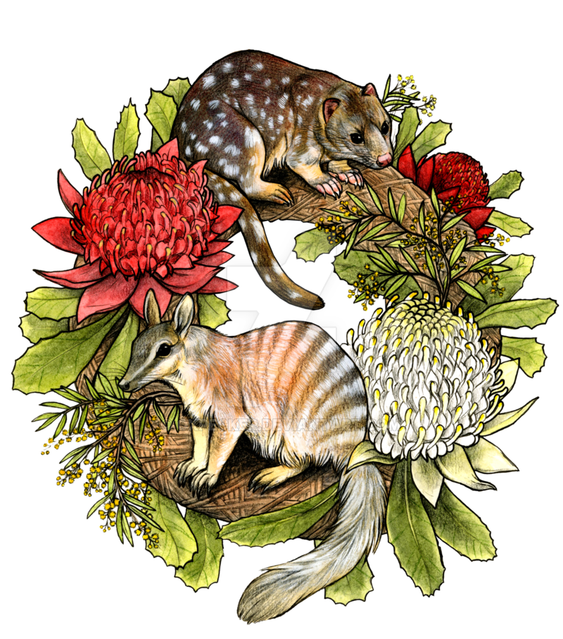 Australian drawing animal native. Wreath by oxpecker on