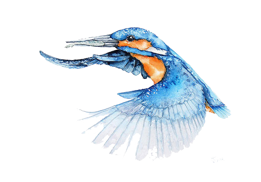 Function drawing kingfisher. Bird watercolor painting architect